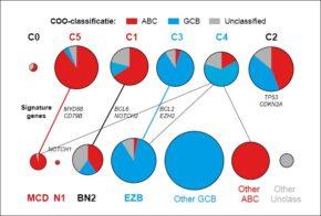 FIGUUR 1. Overzicht van de overeenkomsten tussen de classificatiesystemen van recente genetische onderzoeken. In de bovenste kolom zijn de subgroepen uit het onderzoek van Chapuy et al. weergeven en in de onderste rij de subgroepen uit het onderzoek van Schmitz et al. De grootte van het cirkeldiagram geeft de grootte van de groep aan. De belangrijkste signature veranderingen die de verschillende subgroepen definiëren zijn weergeven. De lijnen wijzen de overeenkomsten tussen de subgroepen aan. De onderverdeling volgens de COO-classificatie is aangegeven in het cirkeldiagram: ABC in rood, GCB in blauw en niet-geclassificeerd in grijs.