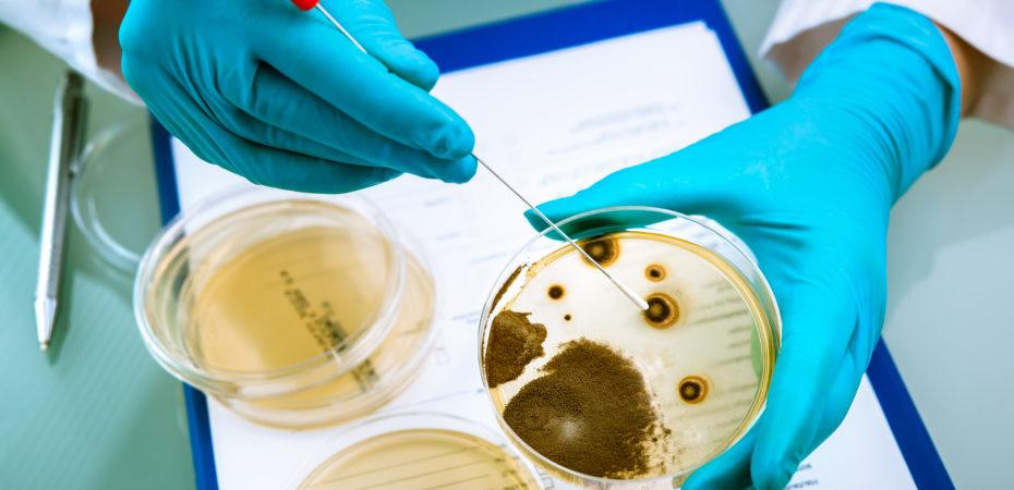 kans op listeria-besmetting groter bij multiple myeloom behandeling